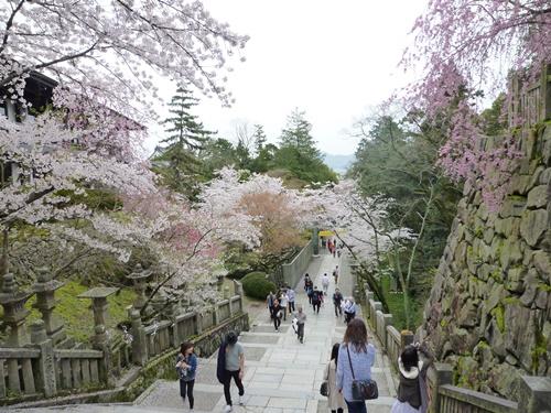 階段からの桜